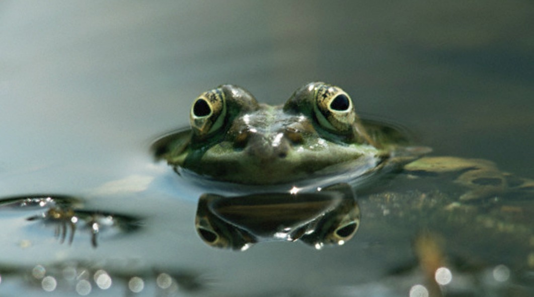 Boiling Frog and Business Strategic Management