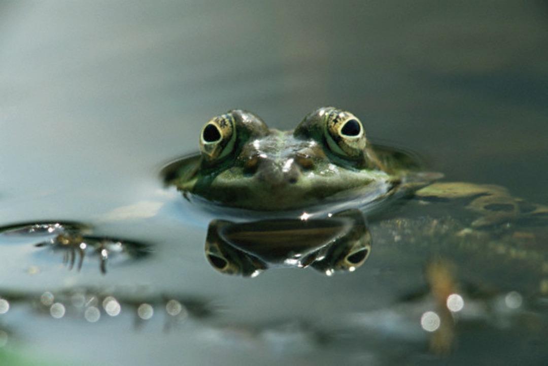 boiling frog wikipedia download pdf