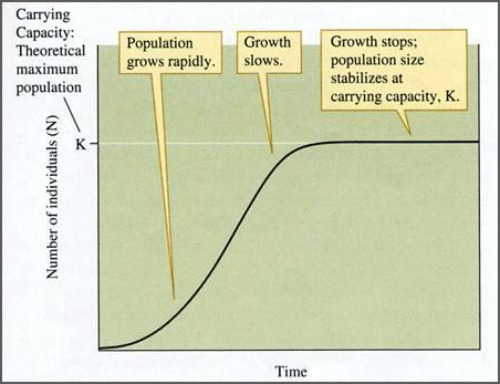 A curve illustrating what happens to population numbers as a population reaches its carrying capacity and oscillates around it.