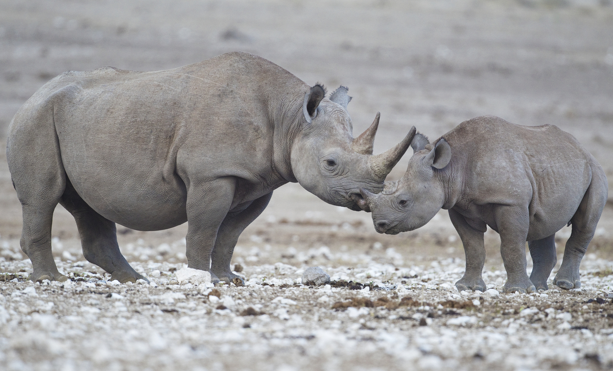 Animal Extinction Causes and Effects