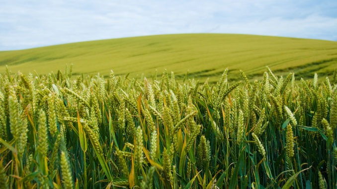 Food Shortage Causes, Effects and Solutions