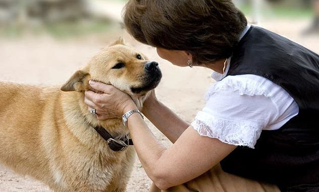 Dog – Human Communication Intentional vs Unintentional Cues